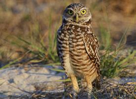 Western Burrowing Owl Workshop 2013-2 program image
